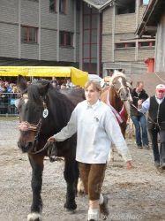 norikerzucht_steinhauser_114