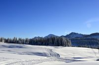 Alpe_Moos_Steinhauser_Riefensberg_Winter_113