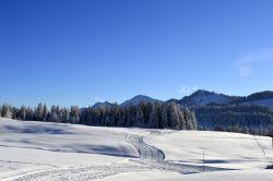 Alpe_Moos_Steinhauser_Riefensberg_Winter_113