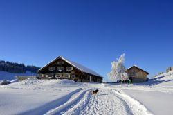 Alpe_Moos_Steinhauser_Riefensberg_Winter_114