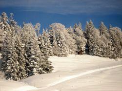 Alpe_Moos_Steinhauser_Riefensberg_Winter_34