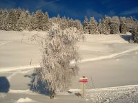 Alpe_Moos_Steinhauser_Riefensberg_Winter_35