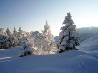 Alpe_Moos_Steinhauser_Riefensberg_Winter_40