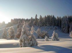Alpe_Moos_Steinhauser_Riefensberg_Winter_42