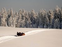 Alpe_Moos_Steinhauser_Riefensberg_Winter_52