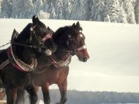 Alpe_Moos_Steinhauser_Riefensberg_Winter_54