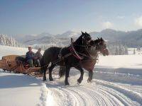 Alpe_Moos_Steinhauser_Riefensberg_Winter_55