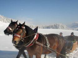 Alpe_Moos_Steinhauser_Riefensberg_Winter_56