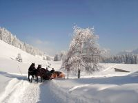 Alpe_Moos_Steinhauser_Riefensberg_Winter_58