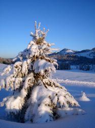 Alpe_Moos_Steinhauser_Riefensberg_Winter_88