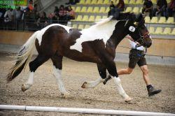 steinhauser_noriker_bundekrung_2011_246024