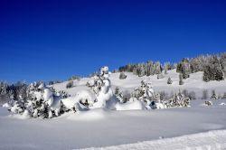 Alpe_Moos_Steinhauser_Riefensberg_Winter_101