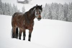 Alpe_Moos_Steinhauser_Riefensberg_Winter_115