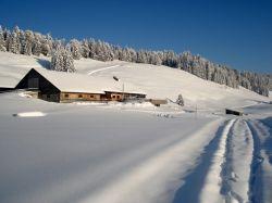 Alpe_Moos_Steinhauser_Riefensberg_Winter_45