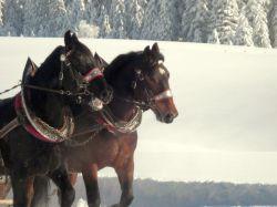 Alpe_Moos_Steinhauser_Riefensberg_Winter_54